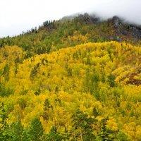 Желтая  сопка :: Николай Танаев