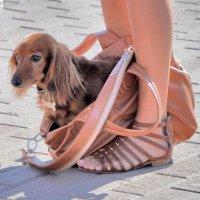 Дама с собачкой. :: Katerina Bondar