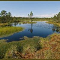 В ясный день на болоте 2 :: Jossif Braschinsky