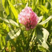 На природе даже трава красивая=))) :: Алёна Князева
