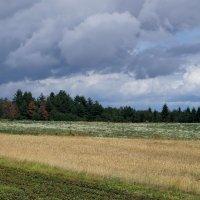 Пшеница :: Вячеслав Тихановский