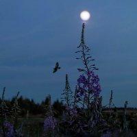 Под луной... :: Удивительное Рядом