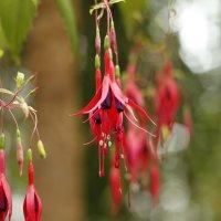 Классный цветок :: esadesign Егерев