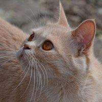 Кошечка :: Виктория Гавриленко