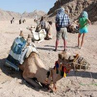 Египет. Пустыня не безмолвна. :: Светлана Яковлева