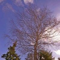 Кривое дерево дольше стоит! :: Валерий Симонов