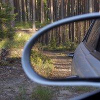 Сказочный лес :: Александр Павленко