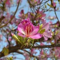 Весна в Средиземноморье :: Галина Сорокина