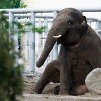 Слон :: Елена Лаптева