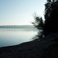 Утренний туман :: Анастасия Чубрик