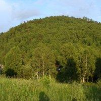 А там за деревьями... :: Инна Ерахтина