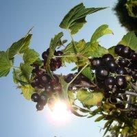 Солнечная ягода. :: Инна Ерахтина