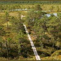 В ясный день на болоте 4 :: Jossif Braschinsky
