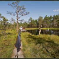 В ясный день на болоте 3 :: Jossif Braschinsky