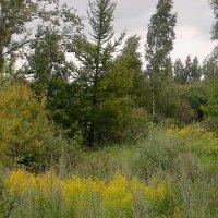 Немного леса, немного цветов. :: Sergey Serebrykov