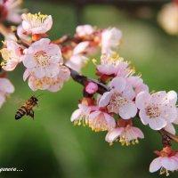 Летящая пчела :: Анастасия Брязгунова