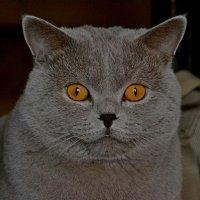 Папа (кошачья семейка) :: Елена Третьякова