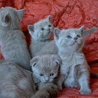 Кошачья семейка :: Елена Третьякова