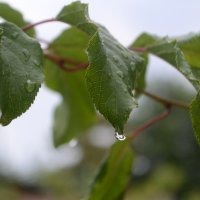 Люблю я дождь, когда он тёплый :: Анастасия Веременко