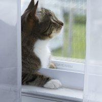 Эх птицы и всякие мушки, ваше счастье что сетка в окне... :: Яков Геллер