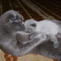 кошачья нежность :: валентин яблонский