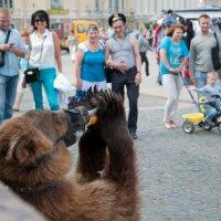 Медведь в городе :: Katerina Bondar