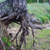 Крепкое дерево :: Svetlana Belousova