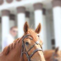 портрет лошади :: Елена Аксамит