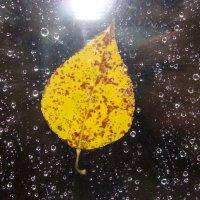 последний жёлтый лист... :: Инна Ерахтина