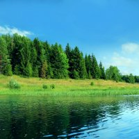Тихий берег, камыши - просто праздник для души ) :: Алексей Ситников