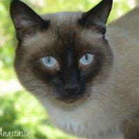 Мой любимый котик :: Анастасия Фадеева
