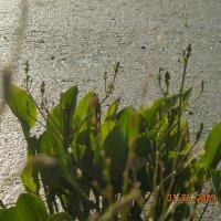 блики солнца :: dfcgv fghjk
