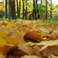 Шелест листьев или что такое осень? (Ботанический сад) :: Дмитрий Родышевцев