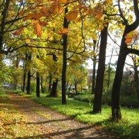 Золотая аллея (Ботанический сад) :: Дмитрий Родышевцев