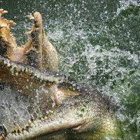 Крокодилы :: Скрылёв Александр