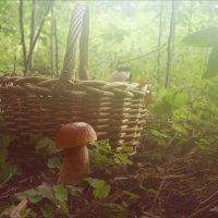 Утро в лесу... :: Елена Kазак