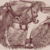 Horse 2 :: Юрий Goa
