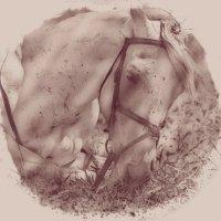 Horse 3 :: Юрий Goa