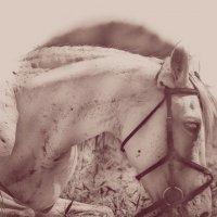 Horse 4 :: Юрий Goa