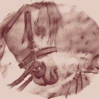 Horse 1 :: Юрий Goa
