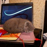 кошка с мышкой :: валентин яблонский
