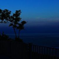 Темная ночь, только чайки свистят по степи... :: Владимир Харченко