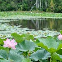Лесное озеро :: Елена Ткаченко