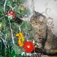 кот у елки :: dfcgv fghjk