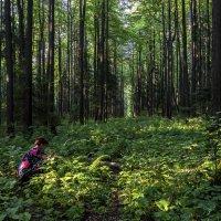В храме леса. :: Валерий Молоток