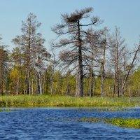 В краю голубых озёр... :: Сергей Золотухин