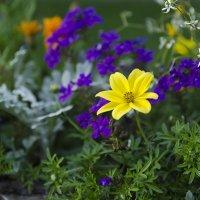 Цветочки :: Bronius Gudauskas