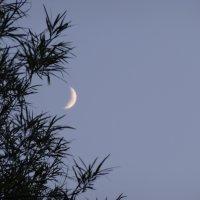 Луна :: Ser Gun ...