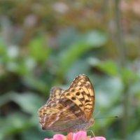 Бабочка :: Ольга Мамаева