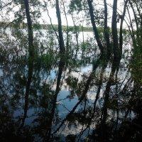 прудик решил утопить деревья) :: Чулпан Латыпова